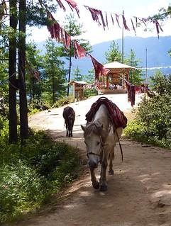 sikh pony 1