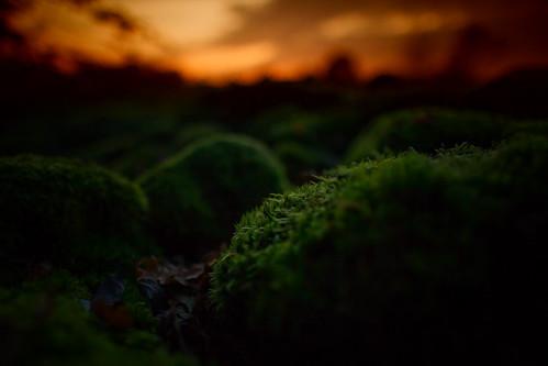 sunset green nature forest dark evening moss twilight woods sweden dusk sverige 24mm zweden canoneos5dmarkii ef24mmf14liiusm