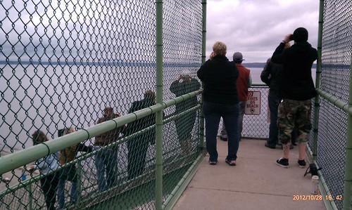 Orca watchers