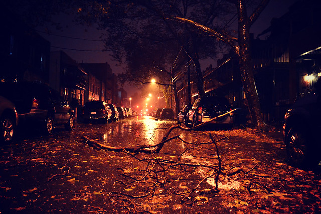 Autumn in New York: Blackouts & Downed Trees