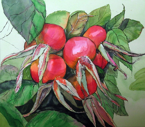 Red Rosehips progress 01