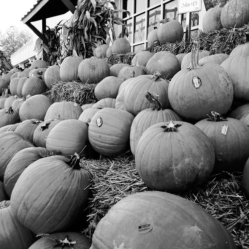 It's pumpkin time at Whole Foods Market