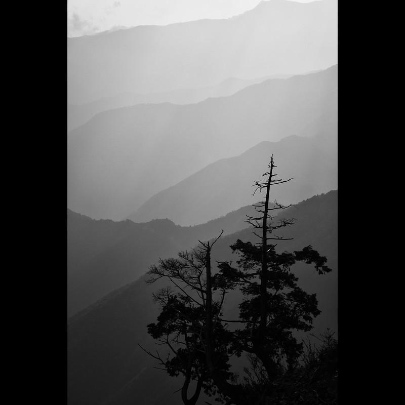 Tree Silhouette *