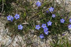 夏季裡,高山草花充分把握短暫的生長週期恣意怒放,由於紫外線強烈花 色往往豔麗異常。 攝影:蔡桉浩