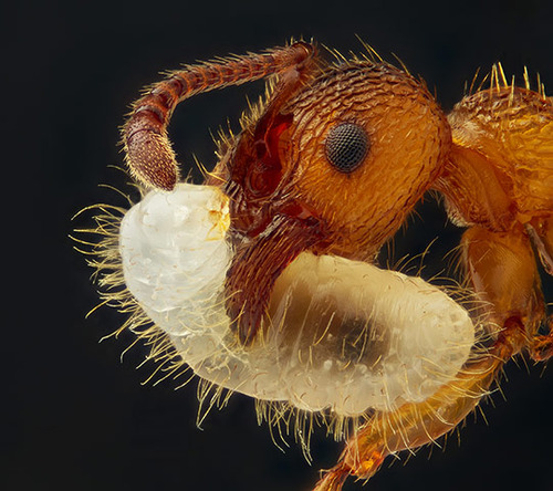 Nikon Small World photography competition 2012 winners