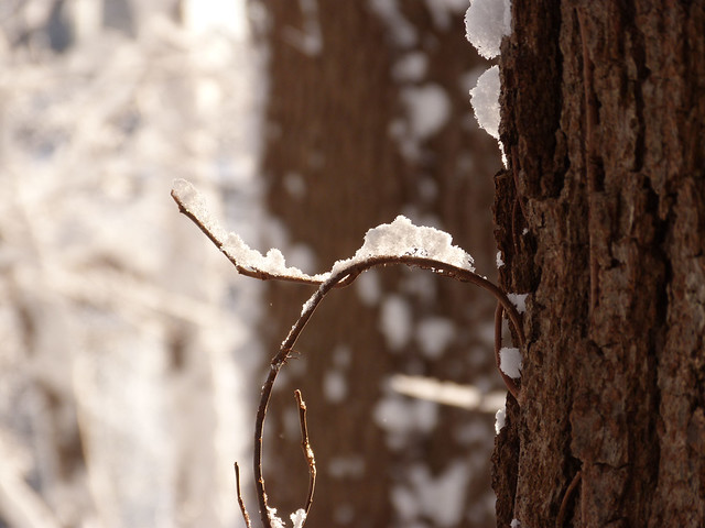 curve branch snow