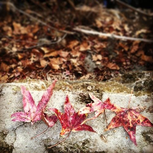 red leaves, wall.
