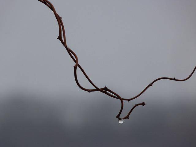 branch_raindrop2
