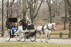 vehicle, pack animal, coachman, horse harness, horse and buggy, land vehicle, carriage, cart,