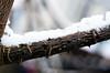 Snow thorns by Louis Bamford