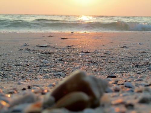 meer welle muschel sonnenuntergang strand florida annamariaisland gulfofmexico shell