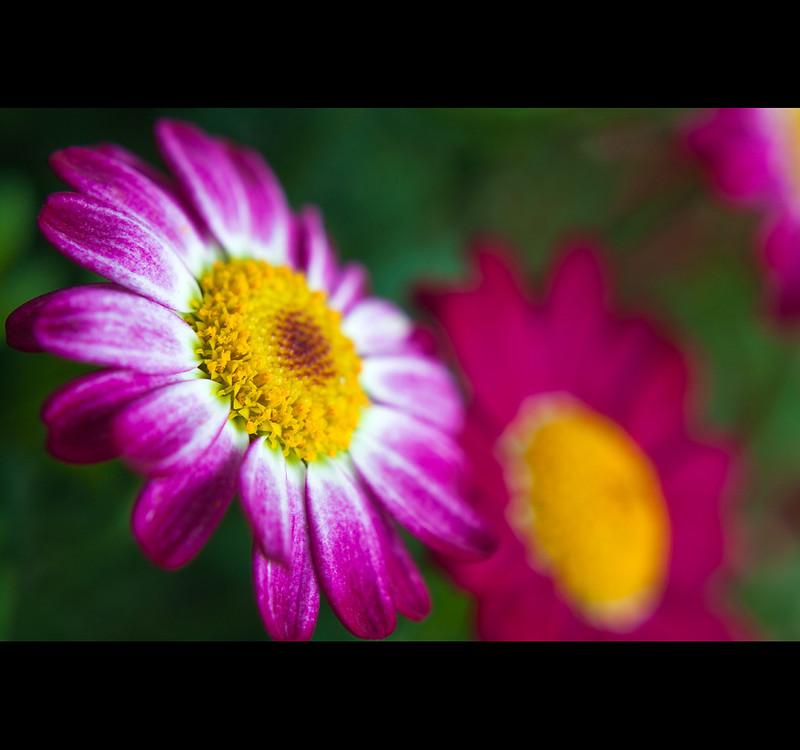 IMAGE: http://farm9.staticflickr.com/8476/8416736629_4fc2fe47a4_c.jpg