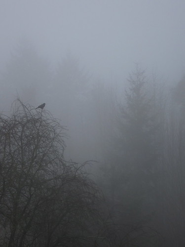 32/365: Singing Through the Fog by jchants