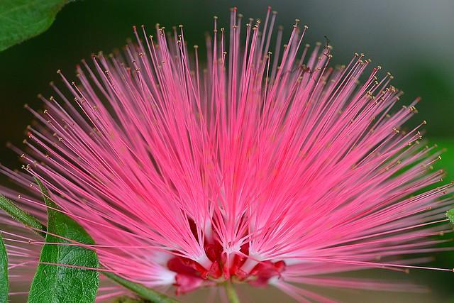 WILD flower!
