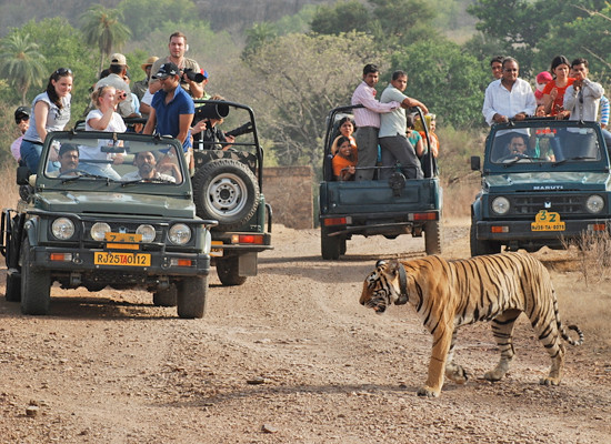 Rajaji National Park in Rishikesh