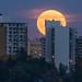 Harvest Moon, Edmonton, Alberta
