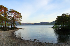 Little bay with pine trees, Killarney lakes, Kerry