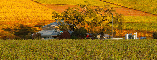 california autumn usa fall unitedstates sonomacounty winecountry sonomavalley kundewinery kundefamilyestate