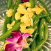 Small photo of Green Beans Almandine