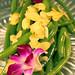 Small photo of Green Beans Almandine