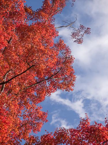 autumn lake landscape kanagawa gh2 microfourthirds lumixpz1442