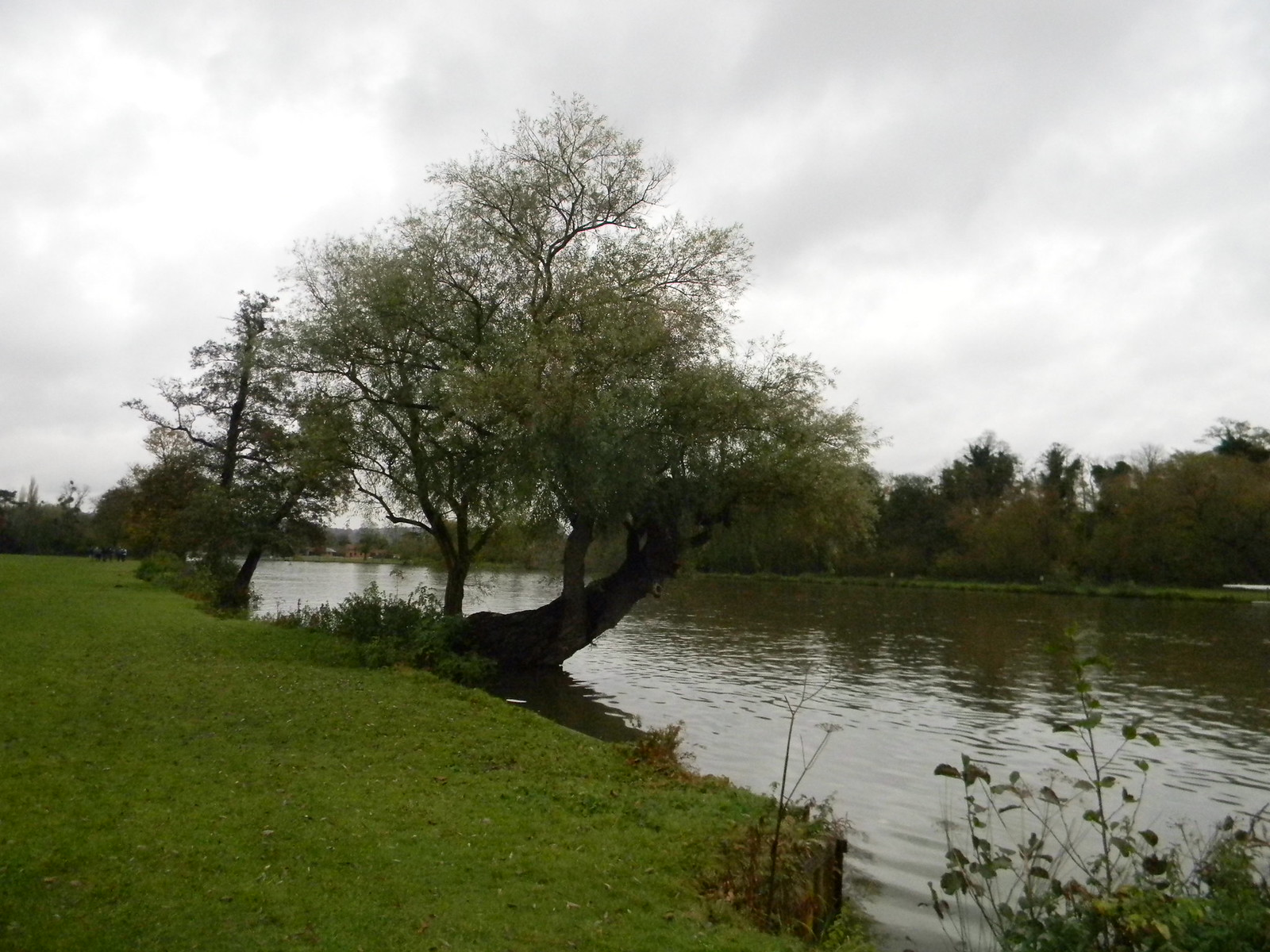 Tree by the Thames Henley Circlular via Hambleden (short)