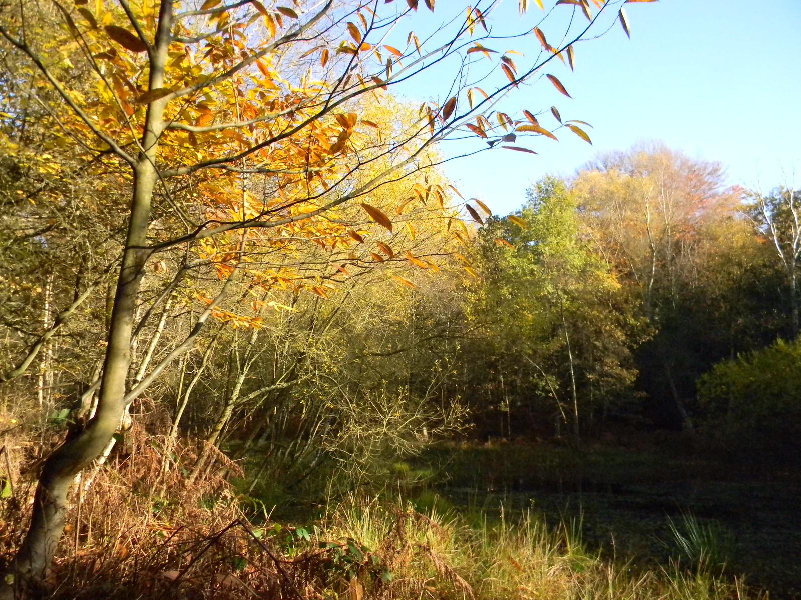 Pond Crowthorne to Sandhurst (avoiding Eversley)