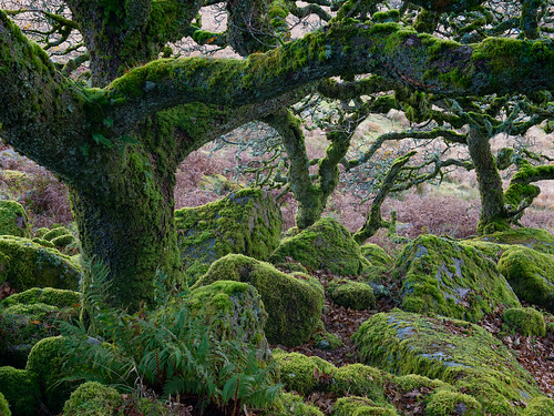 Wistman's Wood-Dartmoor