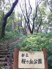桜ヶ丘公園は、まるで山登り