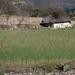 Siembra de Trigo - Wheat Field; Guadalupe Hidalgo, Región Mixteca, Oaxaca, Mexico por Lon&Queta