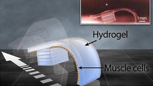 Автономные микромашины созданы с помощью 3D-принтера