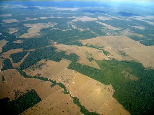 從空中看棲地破碎的亞馬遜。(攝影:林貞妤。)