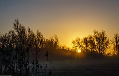 trees sky mist field fog sunrise reeds skåne clear sallerup