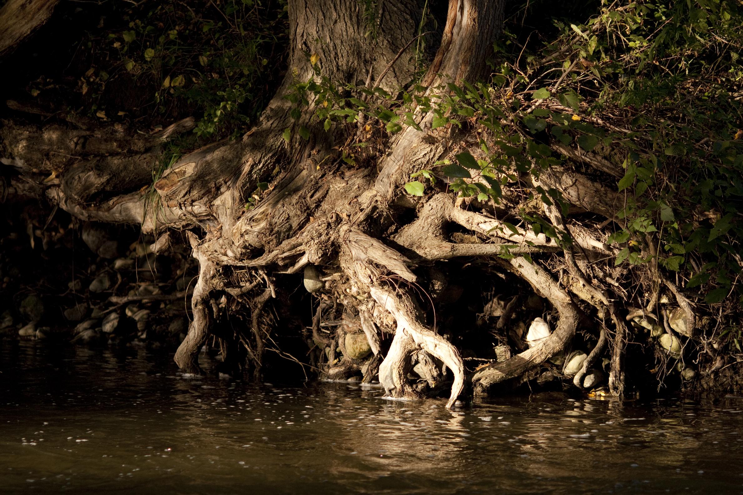 sunlit roots