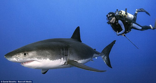 令人難以置信:Botelho不怕這個致命的海洋獵食動物。
