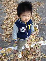 朝散歩 2012/11/21