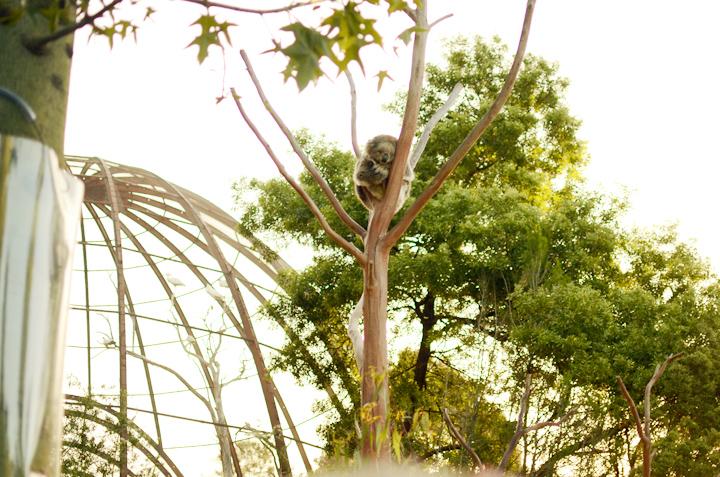 koala and baby kolala