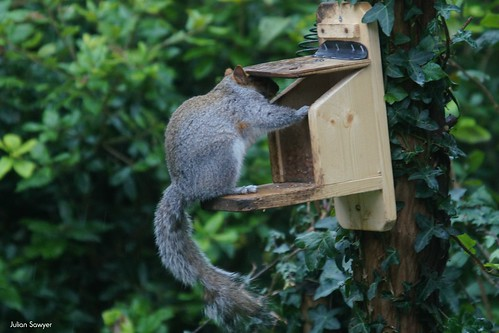 Keeping Your Nuts Dry by julian sawyer - Purbeck Footprints
