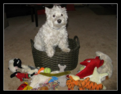 """11/12B ~ """"Dog In A Basket"""""""