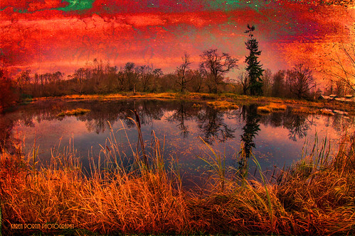 trees texture les reflections fisheye wetland topaz nisquallyriver brumes nisquallynationalwildliferefuge