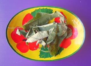 homegrown lemon eucalyptus pot pourri