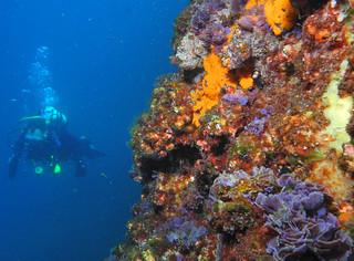 Sponge algae wall