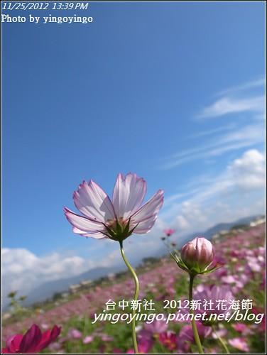 台中新社_2012新社花海節20121125_R0010584