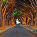 Morning Sunlit Tree Tunnel by David Shield Photography