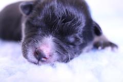 Blue Boy Newborn