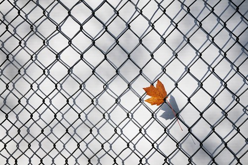 chainlink with lone leaf