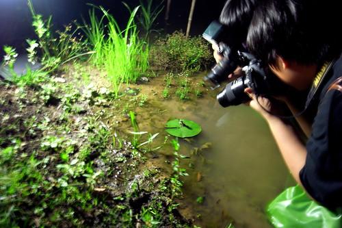 夜間生態攝影-拍水蠆變蜻蜓 攝影:謝基煌