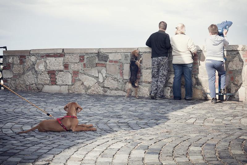 dog, buda side, budapest