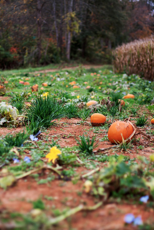 floral pumpkin patch