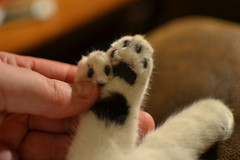 nose(0.0), weasel(0.0), giant panda(0.0), animal(1.0), pet(1.0), mammal(1.0), close-up(1.0),